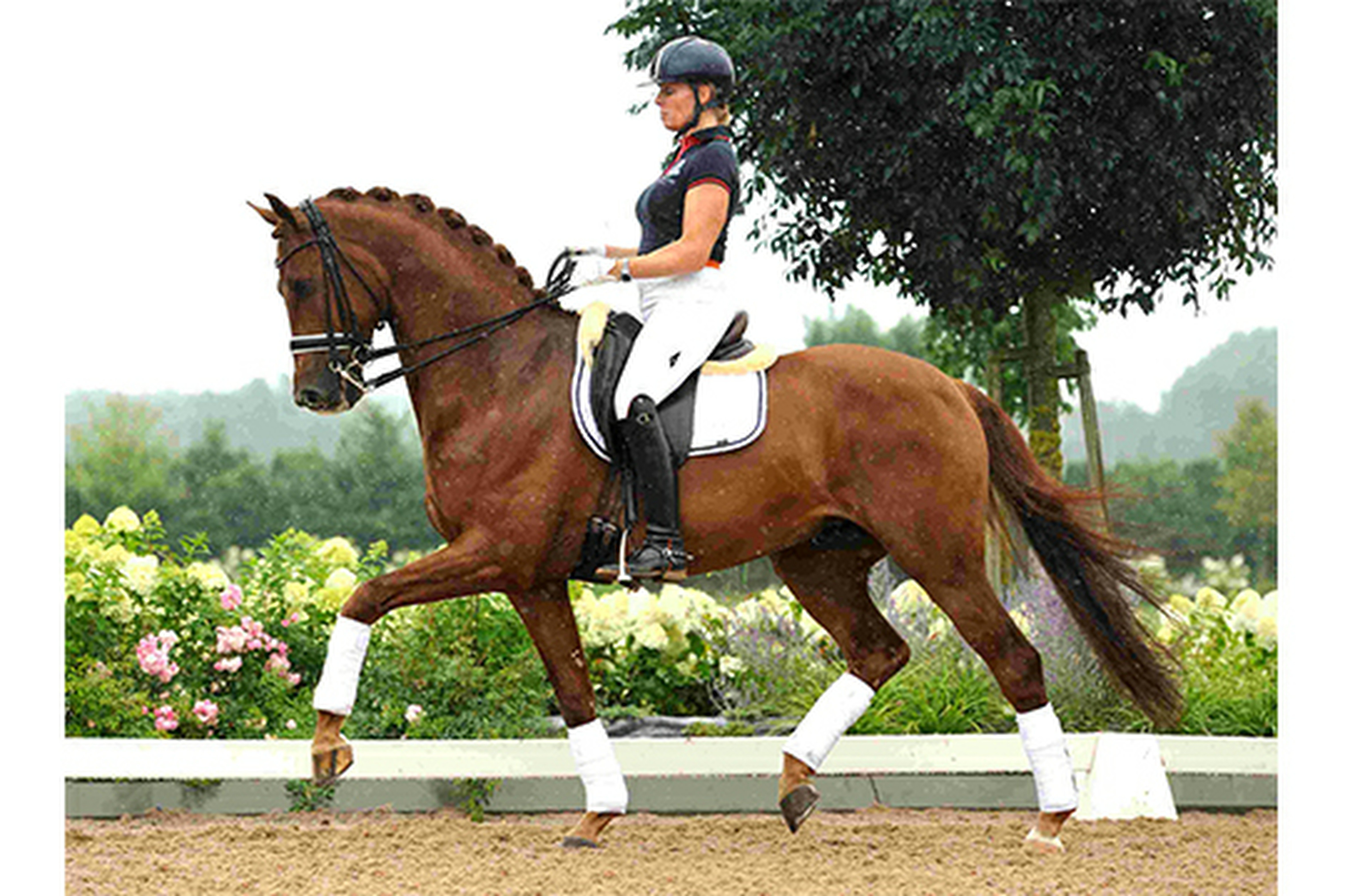 Deejay STH verkocht op Equine Elite veiling