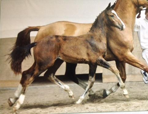 Horse Zo Special (Zo Special D)