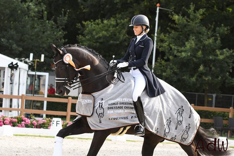Cum Laude wint Stallions of the Year Ermelo